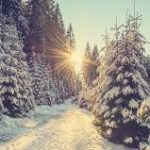 Top 3 Fun Winter Activities for Your Family